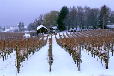 001 ice wine vineyard