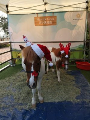 黃金海岸酒店  親親小馬
